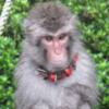 志村動物園で放送!東筑波ユートピアの入園料半額日ってあるの?割引券情報や口コミま